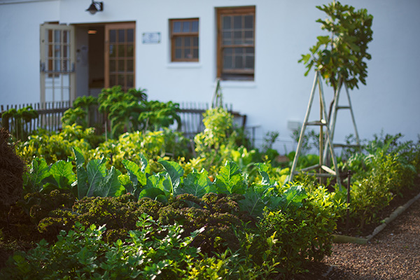 Image of the Food Fanatics organic garden - The Homestead Venue Hire Cape Town